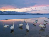 Lake Kussharo in Hokkaido, met wilde zwanen op de voorgrond. © Jeffrey Van Daele