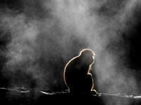 Een sfeerbeeld van een Japanse makaak bij de hot springs. © Jeffrey Van Daele