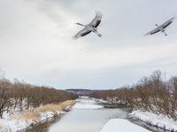 Otowabashi bridge in Hokkaido, een ideale plaats om kraanvogels te fotograferen. © Jeffrey Van Daele