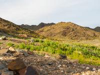 Groene valleien barsten in het voorjaar van de doortrekkers. © Machiel Valkenburg