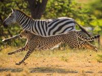 Synchroon lopen. © Billy Herman