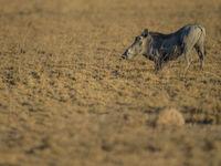Pumba in actie. © Billy Herman