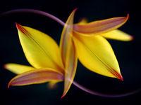 Symétrie contrastée © Jonathan Lhoir