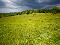 Orchidées dans les champs © Jonathan Lhoir