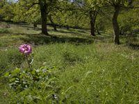 Een sfeerbeeld van een lokale boomgaard met weelderige ondergroei. © Patrick Keirsebilck