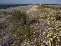 De kustlijn is in het voorjaar vaak de eerste locatie waar zangvogels neergaan op weg naar het noorden. © Patrick Keirsebilck