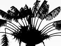 Séance de noirs-et-blancs. © Billy Herman