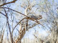 Ce caméléon garde ses distances par rapport au photographe. © Billy Herman