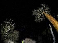 Cet habitat mystérieux est le biotope du fossa. © Billy Herman