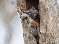 Les arbres creux servent de résidence à de nombreuses espèces. © Billy Herman