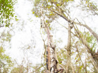 Image abstraite d'un caméléon dans son environnement. © Billy Herman
