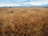 Les plaines de l'intérieur du pays sont un environnement complètement différent, avec de nombreuses spécialités. © Billy Herman