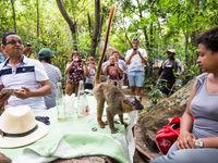 Certains lémuriens sont particulièrement habitués aux humains. © Billy Herman