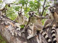 Ils sont très mignons, mais restent bien sûr des animaux sauvages. © Billy Herman