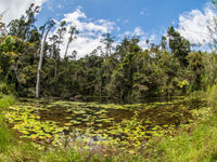 Un plan d'eau en lisière de forêt. © Billy Herman
