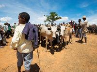 Beaucoup de locaux vivent de l'élevage, ce qui malheureusement met en danger les habitats naturels. © Samuel De Rycke