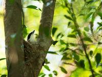 L'endroit idéal pour construire son nid. © Samuel De Rycke