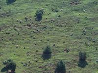 De heuvels worden vaak intensief begraasd. © Billy Herman
