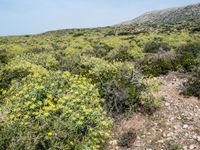 De vegetatie hier is steevast het broedgebied van diadeemroodstaartjes. © Billy Herman
