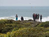 De groep speurt naar zeevogels bij Cap Rhir. © Billy Herman