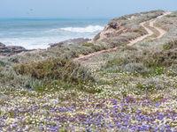 Voorjaarsflora te Cap Rhir. © Billy Herman