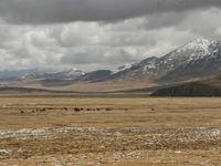 Seuls au monde, nous parcourons l'immensité des steppes... © Maarten Jacobs