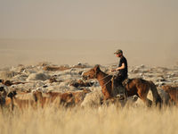 Le cheval et son cavalier ne forment qu'un en Mongolie ! © Maarten Jacobs