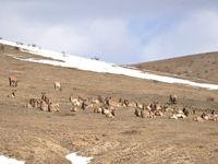 Recherche des cervidés dans les steppes de Mongolie © voyages STARLING