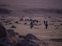 Retour d'une journée de recherche sur le terrain © Billy Herman