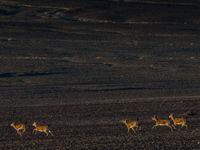 De nombreux mammifères s'observent dans les steppes... © Billy Herman