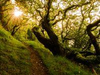 Oude bomen zorgen voor prachtige foto's... © Hans Debruyne