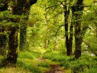 Sfeerbeeld in het bos te Exmoor. © Hans Debruyne