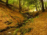 Het beukenbos te Exmoor, met een klein bosstroompje. © Hans Debruyne