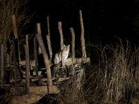 Onwaarschijnlijke foto van een wilde Euraziatische lynx in Polen. © Pieter-Jan D'hondt