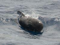 Een griend, gezien vanop de Plancius. © Oceanwide Expeditions / STARLING reizen