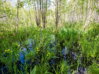 Les marais de Biebrza ont une importance internationale pour la conservation de la nature