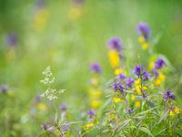 De zomerflora is hier ook niet mis... © Billy Herman