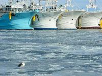 Een blik op Rausu, met op de voorgrond een slaty-backed gull. © Yves Adams