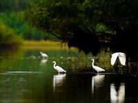De Donaudelta is een walhalla voor reigerachtigen. © STARLING reizen