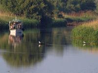 Samen moerasvogels en rietkragen verkennen met de boot. © STARLING reizen