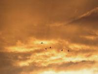 Oies dans un ciel de feu © Noé Terorde