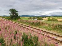 Een overgroeide spoorweg vol met wilgenroosjes. © Bart Heirweg