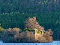 Een oud fort op het water, overwoekerd met berken. © Bart Heirweg