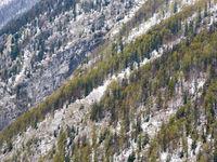 De eerste sneeuwval op een berghelling in Slovenië. © Bart Heirweg