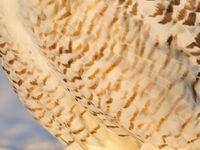 Een close-up van het borstpatroon. © Yves Adams
