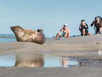 Rustig benaderen we de zeehond om een mooie foto te nemen. © Sandy Spaenhoven