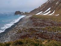 Een gigantische kolonie pinguïns strekt zich uit over het strand. © Frederik Willemyns