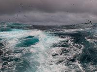 De zee boven South Georgia bulkt van het leven! © Frederik Willemyns