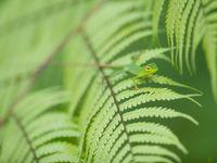 Een jonge hagedis houdt zich schuil in een wereld van groen. © Billy Herman