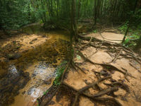 De bosbodem is hier onderhevig aan regelmatige overstromingen. © Billy Herman